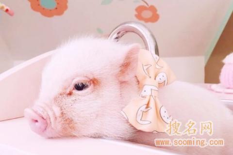 萌萌哒女生<a href=http://www.sooming.com/gexingmingzi/ target=_blank class=infotextkey>个性网名</a>可爱小清新2018 一只特立独行的猪
