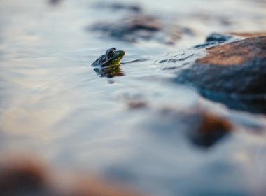 旅行青蛙起什么名字
